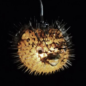 Porcupine quills thick 6 8 land of strangeland of strange for Puffer fish lamp